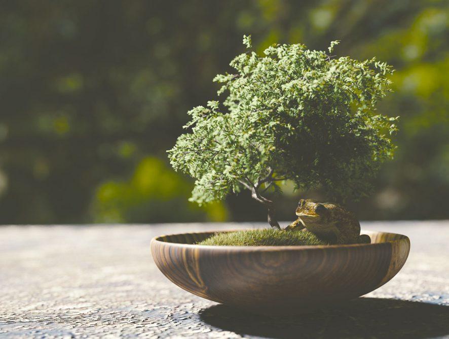 5 dicas para transplantar o seu bonsai com segurança