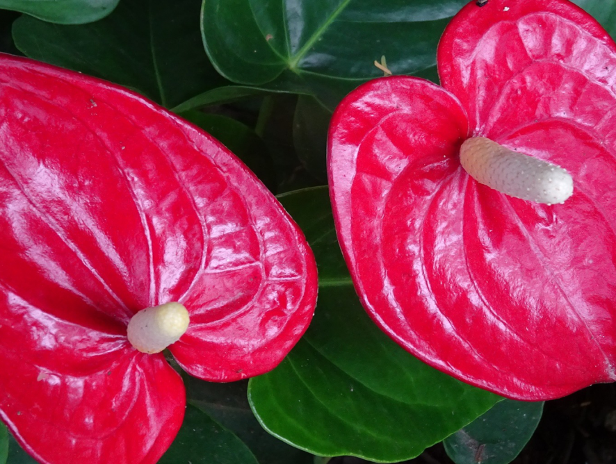 07 dicas de plantas para ambientes fechados