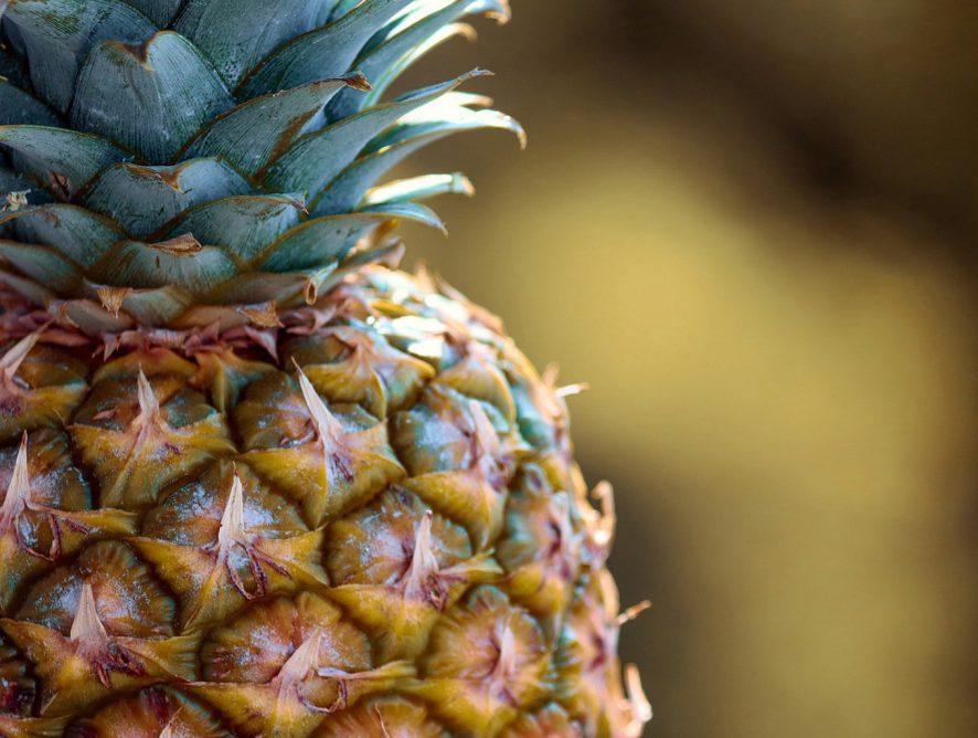 Aprenda como cultivar abacaxi em vaso