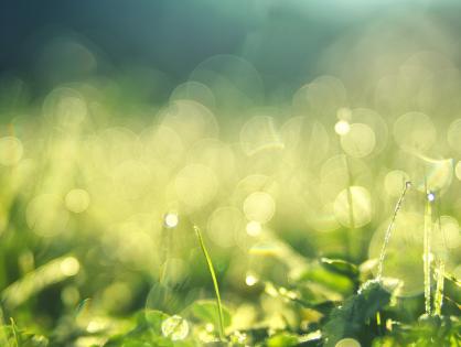 Dicas para eliminar cupim de gramado