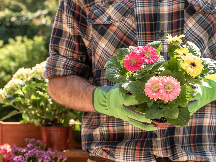 Aprenda como fazer mudas de plantas adultas