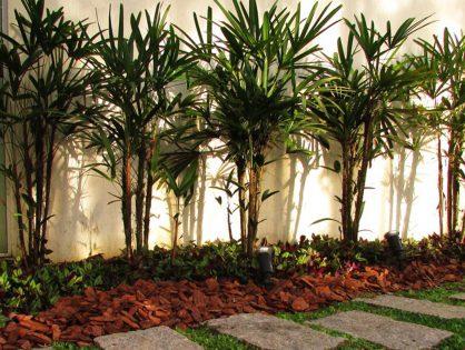Como cuidar de uma palmeira-ráfia