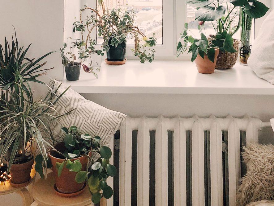 Como viajar sem culpa de deixar o jardim sozinho