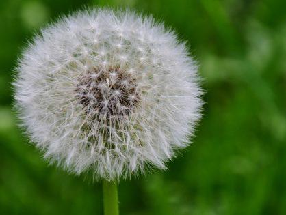 Plantas espontâneas que crescem no jardim