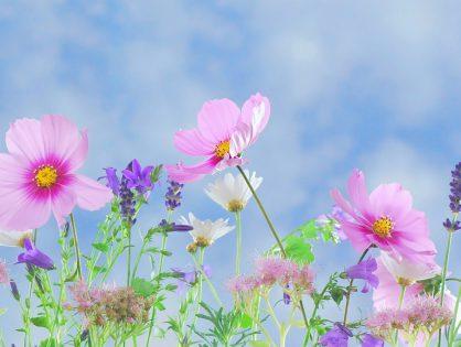Jardim cor-de-rosa: descubra quais espécies usar