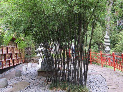 Faça um jardim zen na sua casa