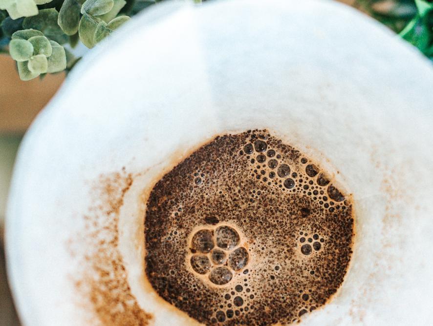 5 formas de usar borra de café no jardim