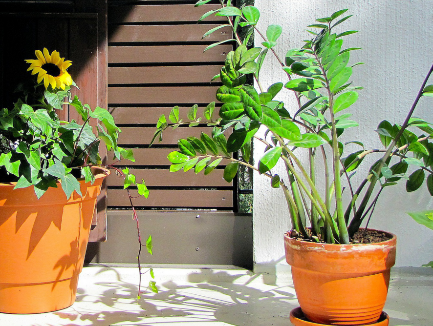 Descubra a flor ideal para cada cômodo da sua casa