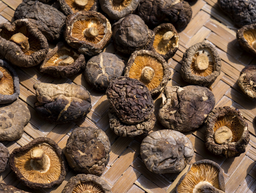 Cultive cogumelos em casa!
