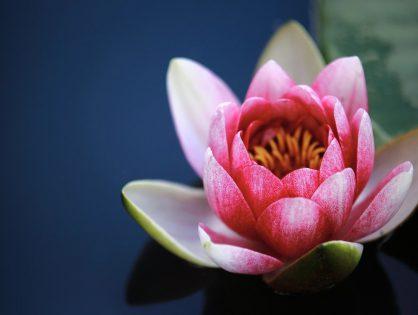 Conheça algumas espécies de plantas aquáticas e seus cuidados básicos
