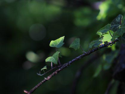Plantas para pendurar: conheça as espécies mais procuradas!