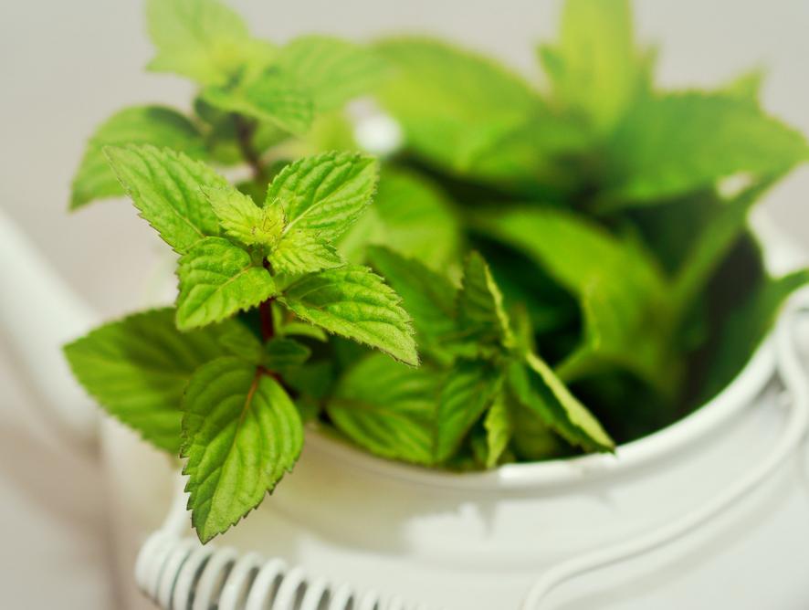 Farmácia natural em casa: descubra quais as plantas ideais