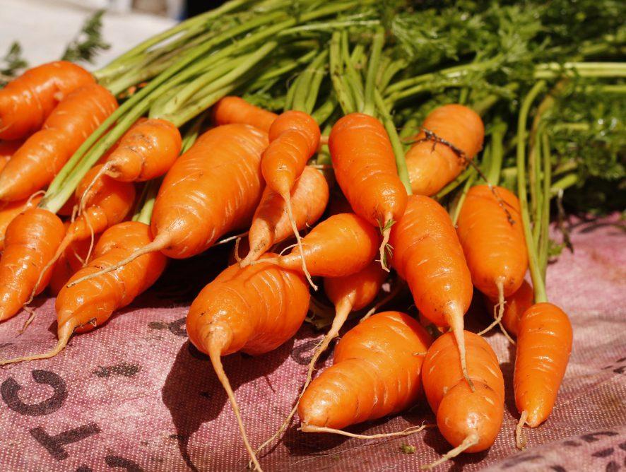 Dicas para cultivar cenouras em vasos
