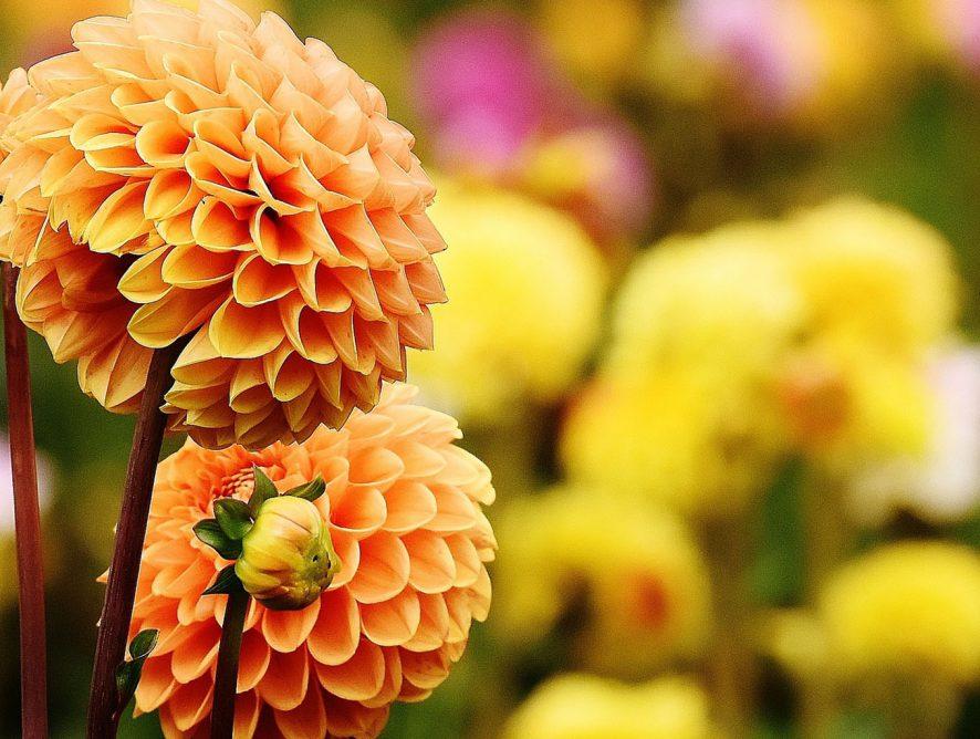 Cinco flores que nunca saem de moda