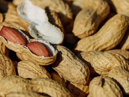 Cultivar amendoins em vasos: delícias sempre a mão!
