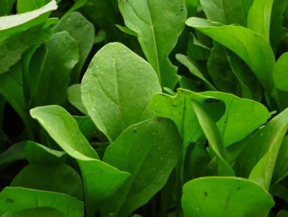 5 verduras indispensáveis na sua horta