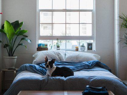 Dormir com plantas no quarto faz mal?