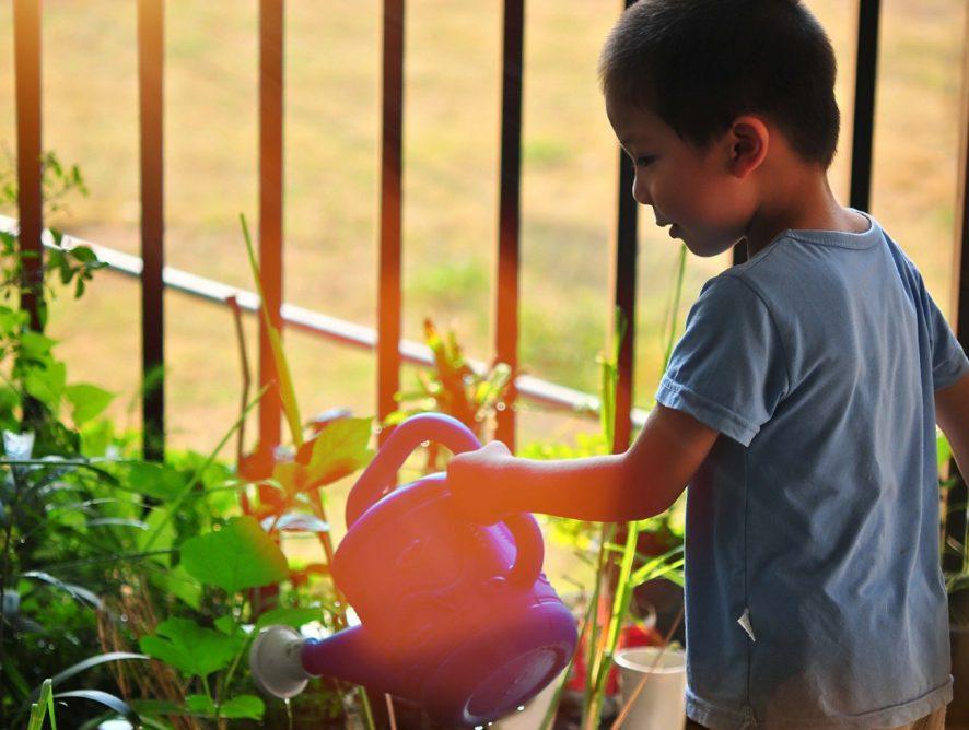 3 coisas que plantas ensinam pras crianças