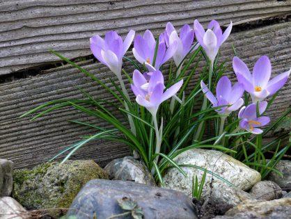 Como fazer jardins com pedras? Aprenda
