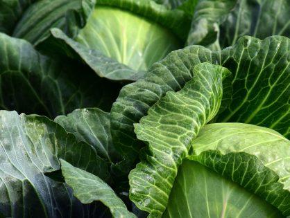 Quais hortaliças para plantar no outono? Descubra!