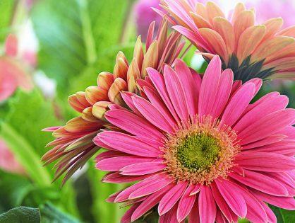 5 flores que se adaptam ao frio e embelezam jardins