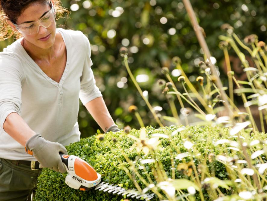 Como cuidar de canteiros e arbustos
