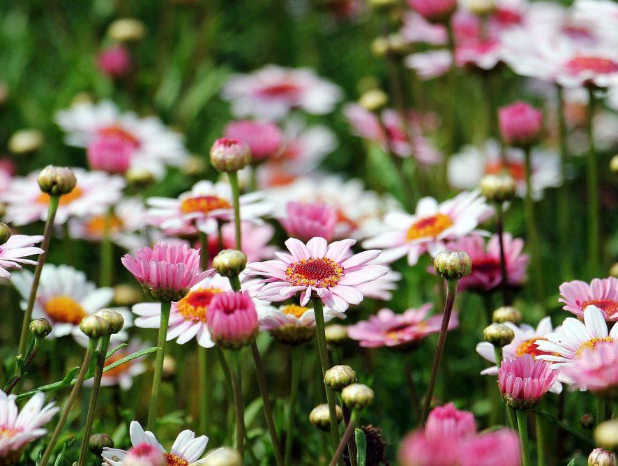 Jardim cheiroso e florido o ano inteiro