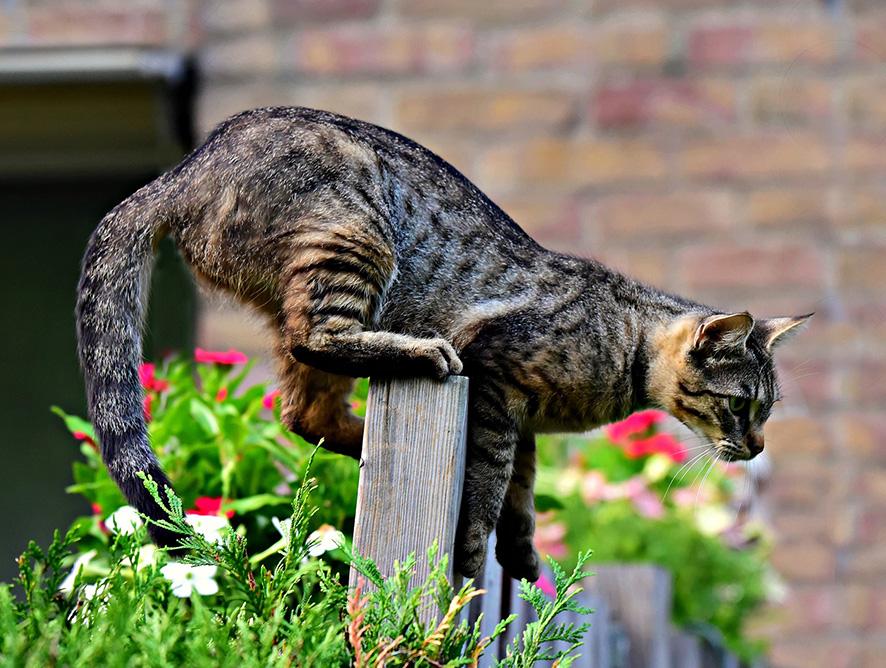 Espécies tóxicas para gatos