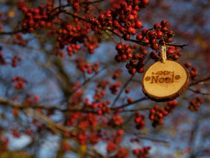 Quatro ideias para decorar o seu jardim para o Natal