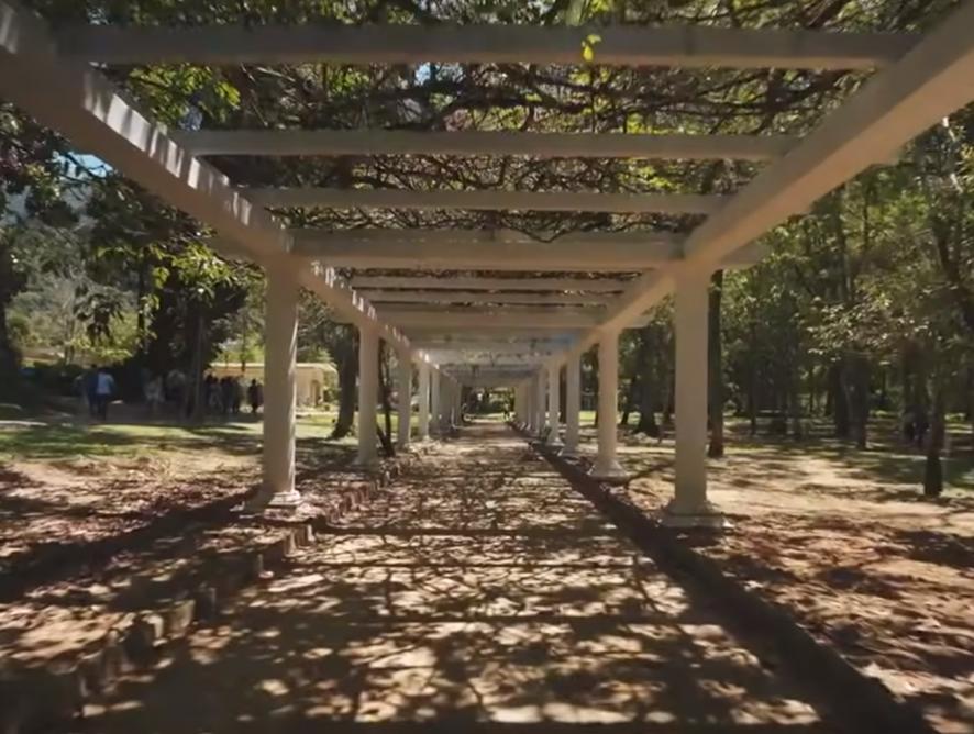 6 coisas para fazer no Jardim Botânico do RJ
