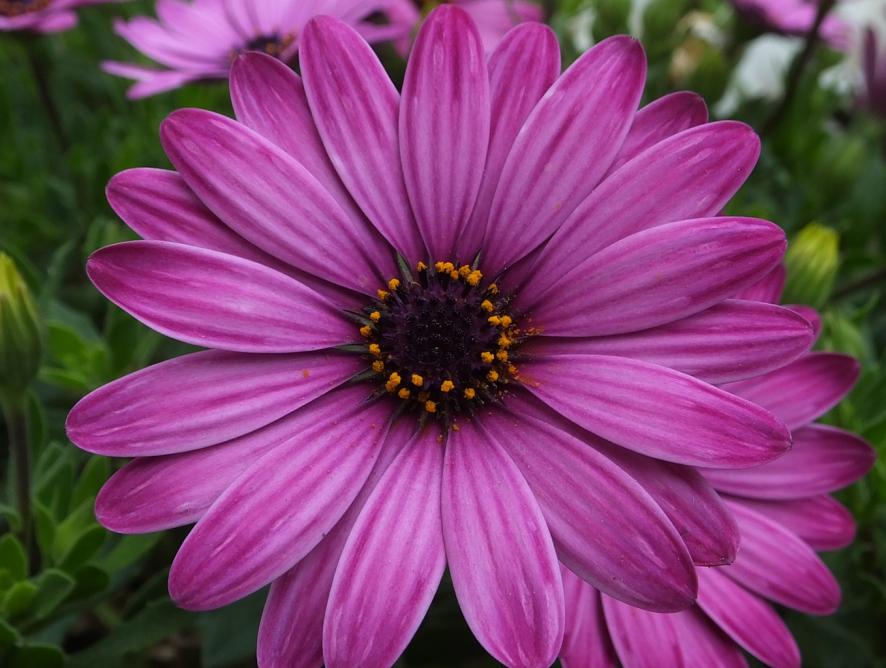 Dicas para fazer fotos lindas das suas flores