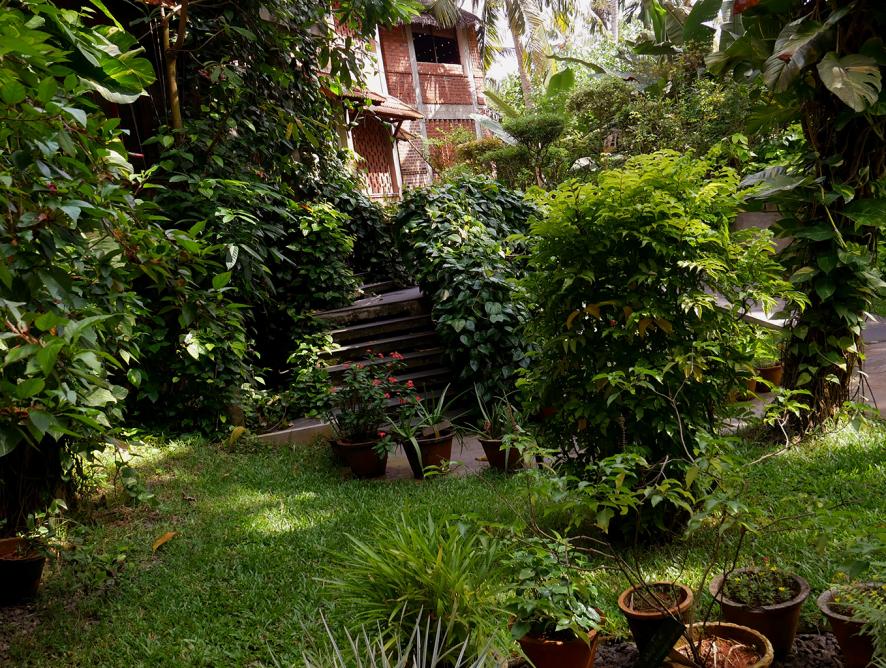 Jardinagem mais sustentável em apenas 5 passos