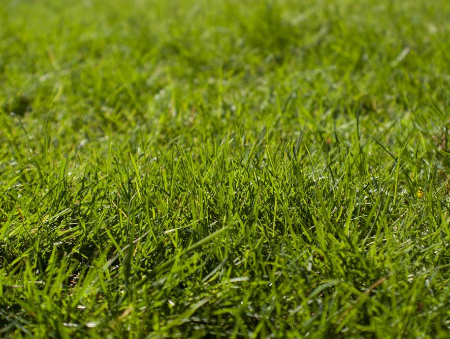 O gramado ideal para a sua necessidade