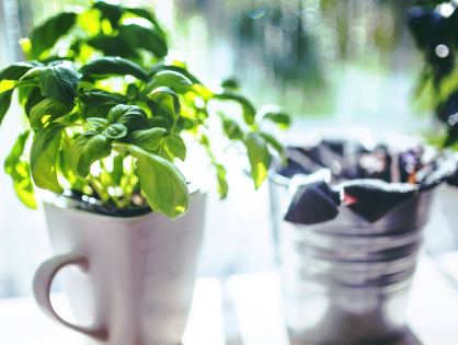 Três ervas para cultivar em vasos pequenos