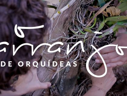 Jardim das Ideias #4: O arranjo de orquídeas