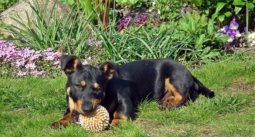 Casa com cachorro: como acertar no jardim?