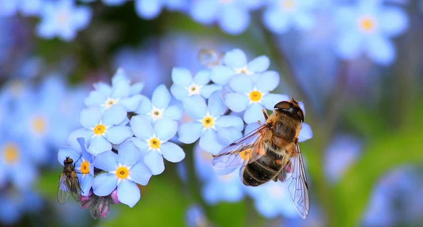 Especial abelhas: grandes amigas do jardim