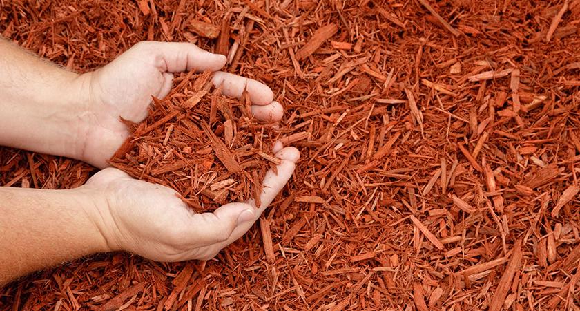 Mulching: aprenda a fazer cobertura vegetal para suas plantas
