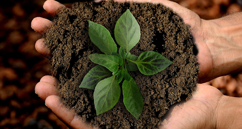 Jardinagem sustentável: os 12 princípios da permacultura
