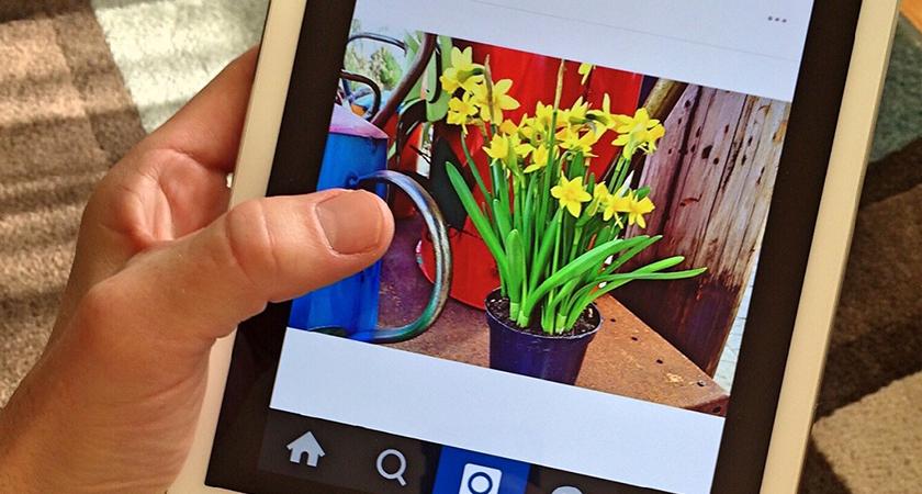 Instagram para apaixonados por jardinagem