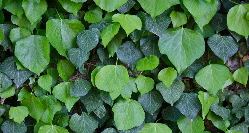 Conheça sete plantas para decoração de interiores