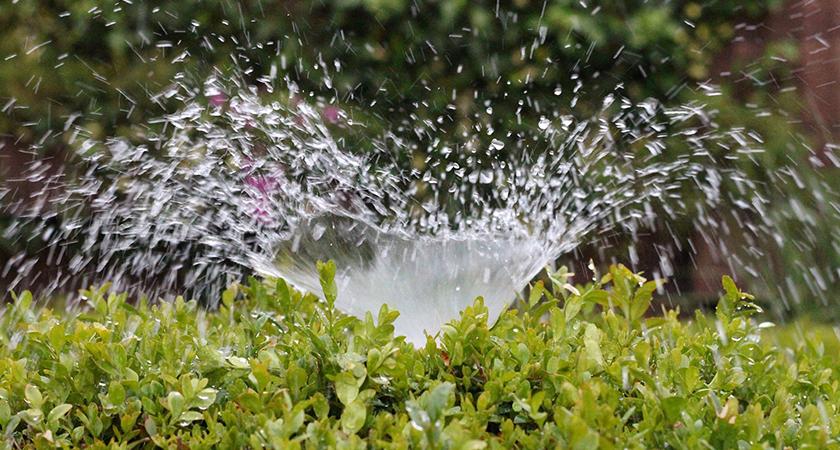 Água na medida: aspersão e gotejamento para jardins