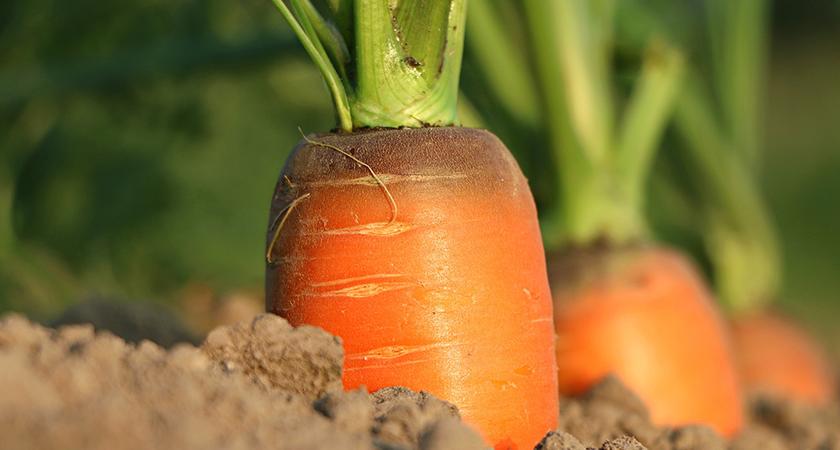 Horta orgânica: dicas e cuidados
