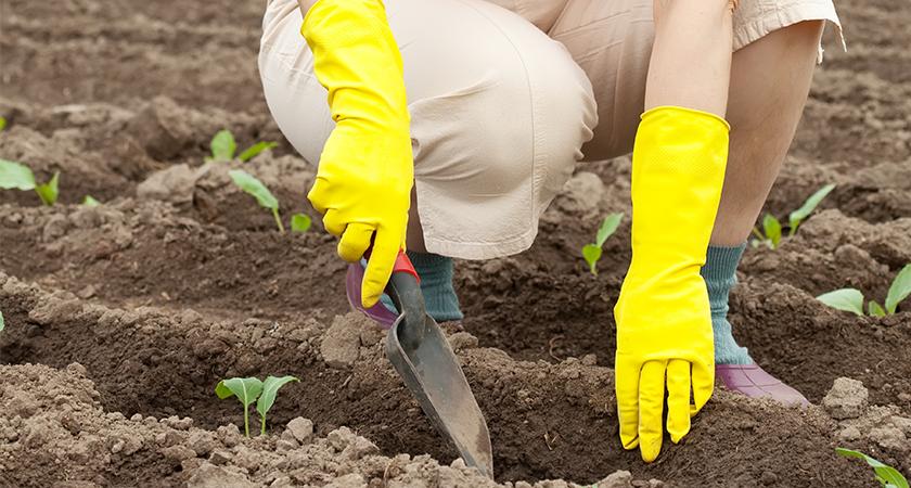 Como escolher as sementes para sua horta doméstica