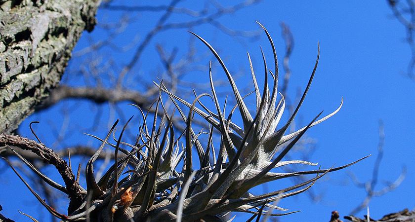 Epífitas não são parasitas: saiba mais