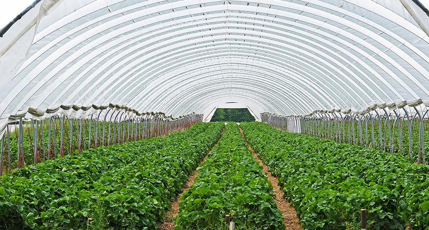 Cultivo de plantas em estufa e todos os seus segredos