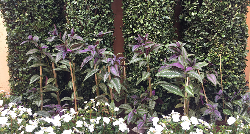 A importância das cores nos projetos de paisagismo e jardinagem