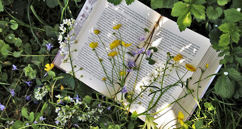 Biblioteca do jardineiro: livros que você precisa conhecer