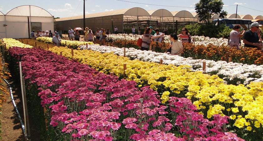 Conheça a Capital Nacional das Flores e visite a Expoflora