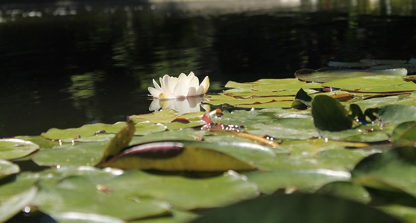 Os segredos e mistérios do lago no quintal: veja como ter o seu!